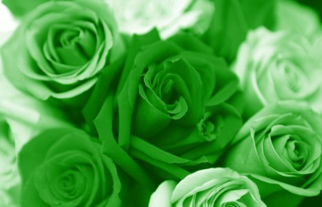 green-valentines-day