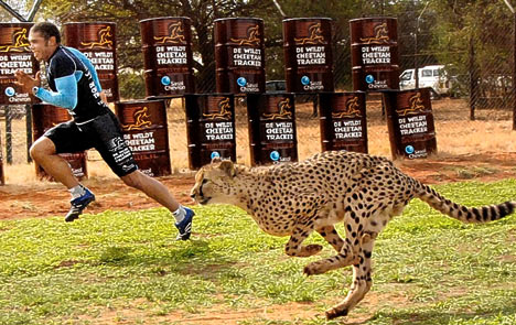 cheetah pe