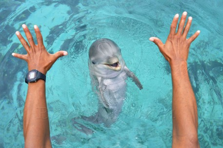 stationing-a-baby-dolphin-457x303