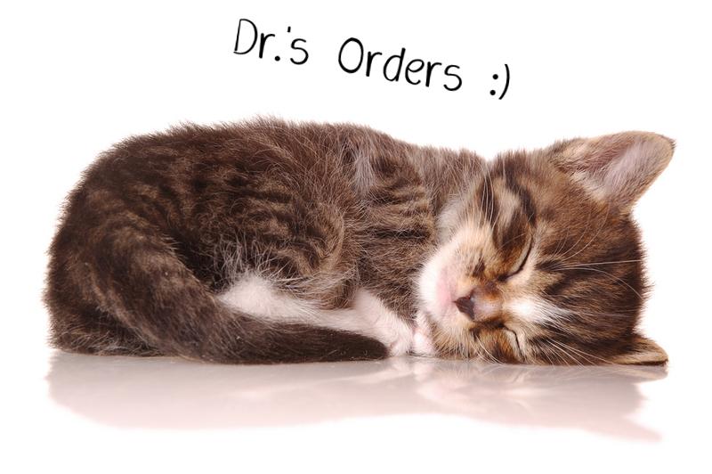 sleeping_kittendr.