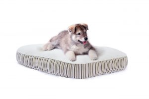 Essentia National Dog Day Giveaway